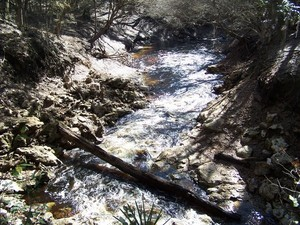 300x225 Alapaha River flowing, in Alapaha Sink, by Chris Mericle, 16 September 2014