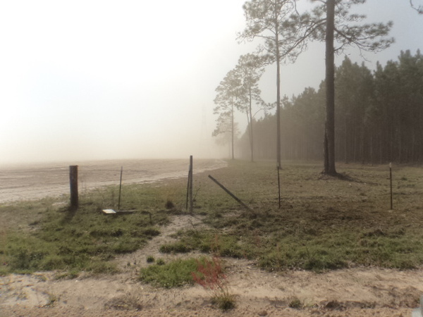 600x450 Blowing into trees, in Dust Storm on Lakeland Sands land in Hamilton County, FL, by John S. Quarterman, for WWALS.net, 25 March 2014