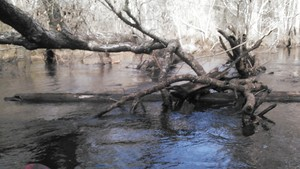300x169 Logs, in Alapaha deadfalls, by John S. Quarterman, for WWALS.net, 17 January 2015