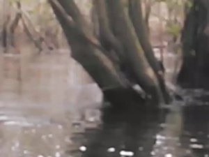 300x225 Movie: Narrow (4.2M), in Alapaha deadfalls, by John S. Quarterman, for WWALS.net, 17 January 2015