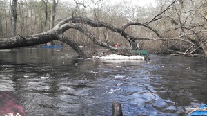 300x169 Foam, in Alapaha deadfalls, by John S. Quarterman, for WWALS.net, 17 January 2015