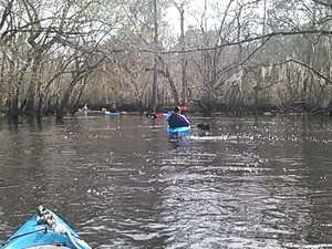 300x225 Right, in Alapaha deadfalls, by John S. Quarterman, for WWALS.net, 17 January 2015
