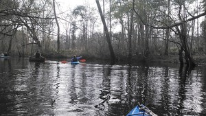 300x169 Clearcut, in Alapaha deadfalls, by John S. Quarterman, for WWALS.net, 17 January 2015