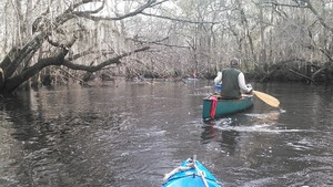 300x169 Bret, in Alapaha deadfalls, by John S. Quarterman, for WWALS.net, 17 January 2015