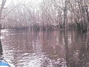300x225 Movie: Shallow (4.4M), in Alapaha deadfalls, by John S. Quarterman, for WWALS.net, 17 January 2015