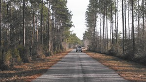 300x169 Rowe Town Church Road, in Alapaha deadfalls, by John S. Quarterman, for WWALS.net, 17 January 2015
