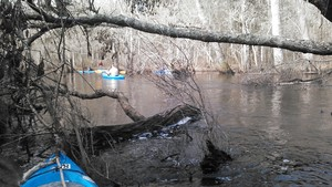 300x169 Obstacle, in Alapaha deadfalls, by John S. Quarterman, for WWALS.net, 17 January 2015