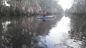 300x169 Deanna, in Alapaha deadfalls, by John S. Quarterman, for WWALS.net, 17 January 2015