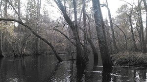 300x169 Arch, in Alapaha deadfalls, by John S. Quarterman, for WWALS.net, 17 January 2015