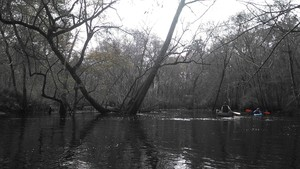 300x169 V acute, in Alapaha deadfalls, by John S. Quarterman, for WWALS.net, 17 January 2015