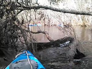 300x225 Movie: Obstacle: (2.6M), in Alapaha deadfalls, by John S. Quarterman, for WWALS.net, 17 January 2015