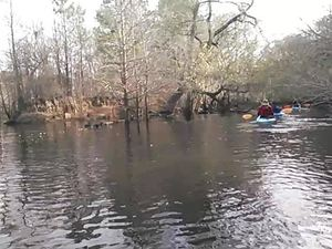 300x225 Movie: Island (2.7M), in Alapaha deadfalls, by John S. Quarterman, for WWALS.net, 17 January 2015