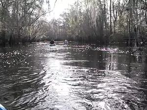 300x225 Movie: Shiny (3.4M), in Alapaha deadfalls, by John S. Quarterman, for WWALS.net, 17 January 2015
