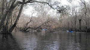300x169 Horizontal, in Alapaha deadfalls, by John S. Quarterman, for WWALS.net, 17 January 2015