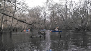 300x169 Tangle, in Alapaha deadfalls, by John S. Quarterman, for WWALS.net, 17 January 2015