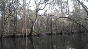 300x169 Vertical, in Alapaha deadfalls, by John S. Quarterman, for WWALS.net, 17 January 2015