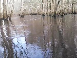300x225 Movie: More foam (2.7M), in Alapaha deadfalls, by John S. Quarterman, for WWALS.net, 17 January 2015