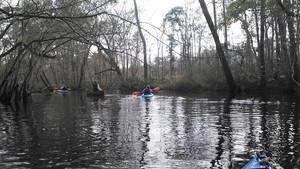 300x169 Onwards, in Alapaha deadfalls, by John S. Quarterman, for WWALS.net, 17 January 2015