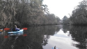 300x169 Glassy, in Alapaha deadfalls, by John S. Quarterman, for WWALS.net, 17 January 2015