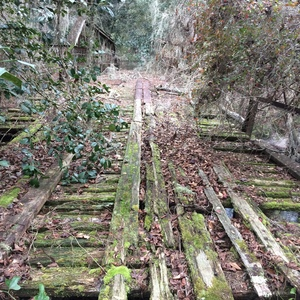 300x300 Mossy roadbed, in Old Bridge over the Alapahoochee River, by Chris Mericle, for WWALS.net, 3 January 2015