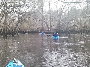 300x225 Left2, in Alapaha deadfalls, by John S. Quarterman, for WWALS.net, 17 January 2015