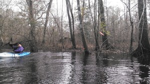 300x169 Jack, in Alapaha deadfalls, by John S. Quarterman, for WWALS.net, 17 January 2015