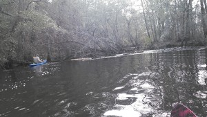300x169 Chris and island, in Alapaha deadfalls, by John S. Quarterman, for WWALS.net, 17 January 2015