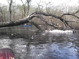 300x225 Movie: Foam (1.1M), in Alapaha deadfalls, by John S. Quarterman, for WWALS.net, 17 January 2015