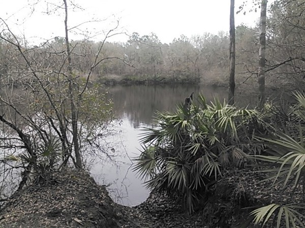 600x450 Shadrick Sinkhole 30.903927, -83.313544, in Sinkholes near the Withlacoochee River, by John S. Quarterman, for WWALS.net, 18 February 2015