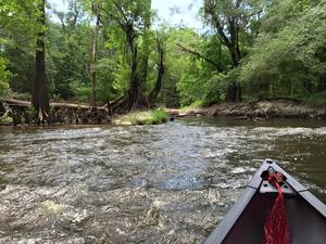300x225 Upstream from GA 133, in Confluence of the Little and Withlacoochee Rivers, by Julie Bowland, for WWALS.net, 2 July 2015
