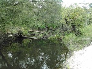 Deadfall just above boatramp 30.8875542, -83.3240433