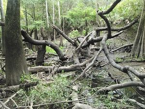 Who is responsible for deadfalls in the Withlacoochee River? 30.8907604, -83.3211441