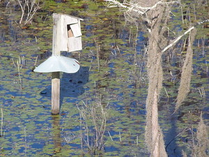 Duck house and Spanish moss