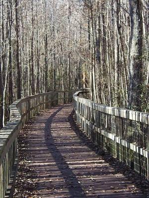 Dappled boardwalk