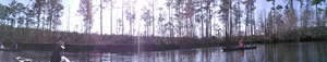 Panorama of bluff 31.1707840, -83.0449142