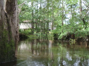 Oak and house on stilts