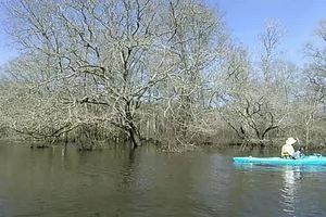 Movie: Bret Wagenhorst paddling (1.7M) 31.2528782, -83.0416717