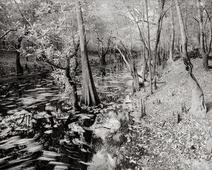 Cypress shoreline