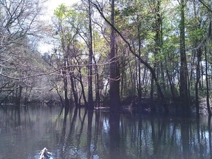 Back to the Withlacoochee River