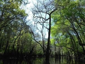 Tree top 30.8911629, -83.3201523