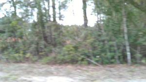 Movie: Pipeline destruction seen through woods, 30.7881640, -83.4456830