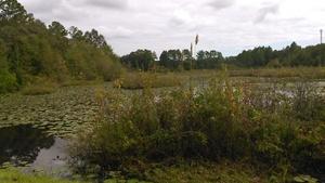 Tiger Creek, Martin Ln., 30.7886420, -83.4450920