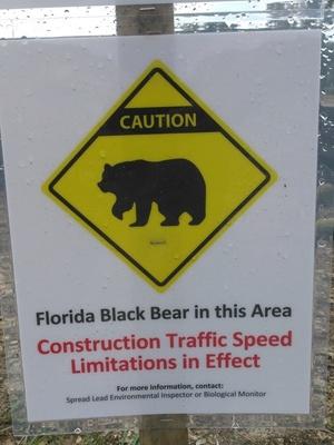 Black bear sign, 30.3917 -83.15291