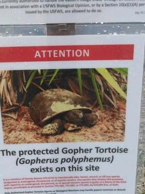 Gopher tortoise sign, 30.3917 -83.15293