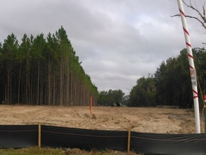 n. to Sabal Trail cut through trees, 30.3919150, -83.1530010