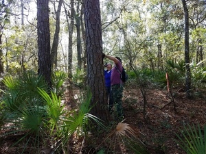 Gretchen and Chris inspecting a pine tree, 30.5852269, -83.0464122