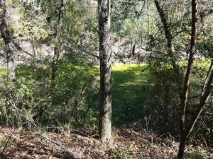 Green Alapaha River; nitrogen? 30.5821472, -83.0417484