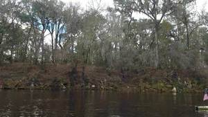 Movie: Suwannee River at Sabal Trail crossing (13M), 30.4075790, -83.1559250