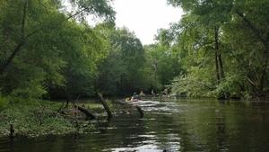 Winding Little River 31.1909413, -83.5262079