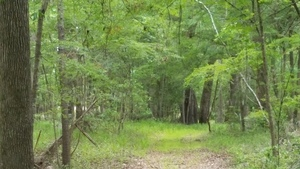 Sabal Trail seen from the riverside 30.4062724, -83.1566252